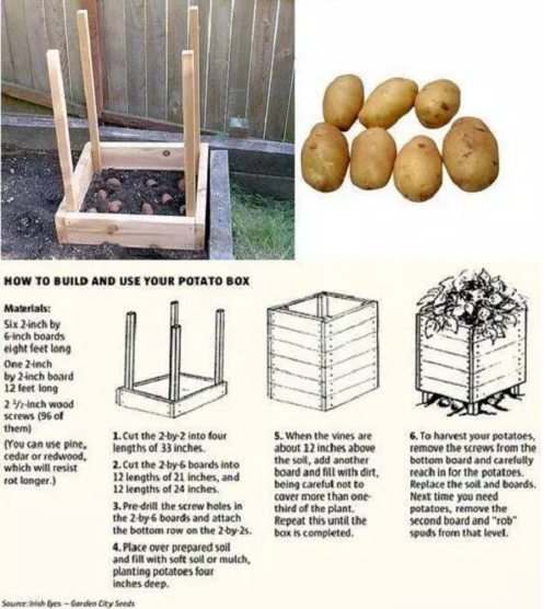 potatoes_in_pallets