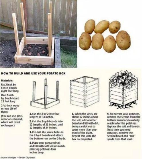 potatoes_in_pallets