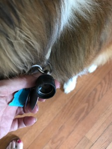 Quick Connector - attached to collar